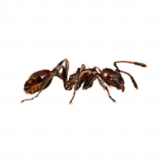 Insekt 2