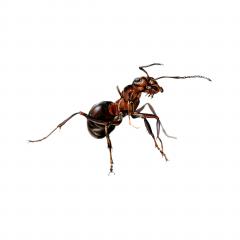 Insekt 3