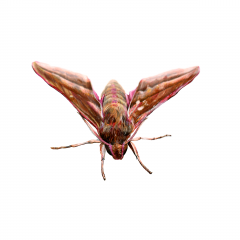 Insekt 4
